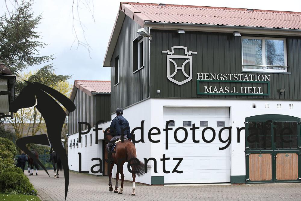 Gestütsportrait Hengststation Hell<br /> Klein Offenseth - Hengststation Stall Hell<br /> © www.sportfotos-lafrentz.de / Stefan Lafrentz