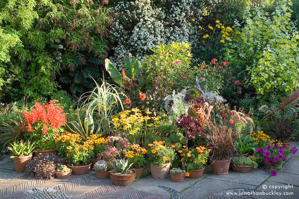 Pot display in the mosaic garden at Great Dixter. Agaves, Ensete, rudbeckias, grasses, salvias, dahlias and aeoniums