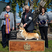 Pembroke Welsh Corgi Club of So Calif. 2019