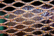 Pattern of rusty grating at the Army Corps of Engineers research pier in Duck, NC.