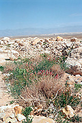 Israel; Judea Desert on the shore of the dead sea; a riverbed. The deep ravine is caused by powerful flash floods that occur in the region. Scarce plants survive by utilizing the off flow of the flood water;