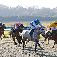 Lingfield 16th November