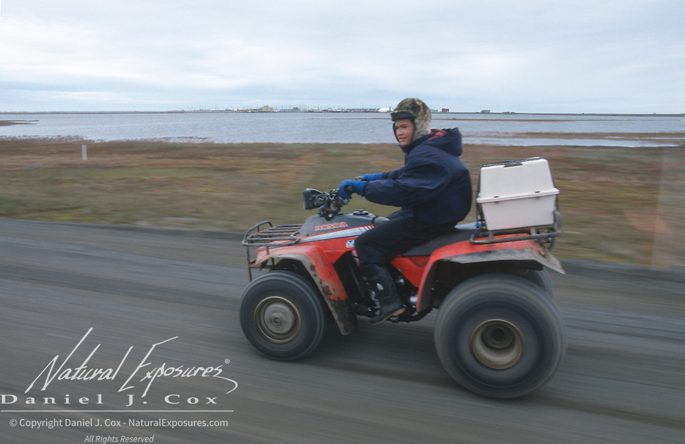 Nuk carries the precious cargo of Snowy Owl chicks on a four wheeler. Barrow, Alaska