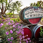 Rodrigue Molyneaux Winery and Vineyard Shoot