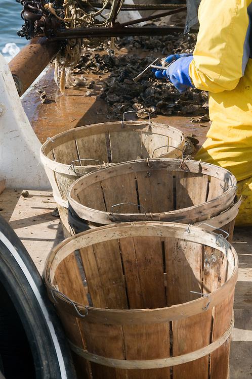 Skipjack sorting oyster shells