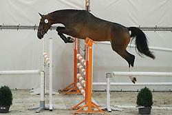 092, Huduela<br /> Vrijspringen Nationale Merriekeuring, 3 jarige springmerries <br /> KWPN Paardendagen Ermelo 2015<br /> © Hippo Foto - Dirk Caremans