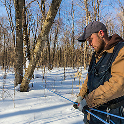 Jean Francois Faucher repairs a sap line on the LaRiviere sugarbush in Big Six Township, Maine. This property has more than 300,000 maple syrup taps and produces 3 - 4 percent of the US maple syrup crop.