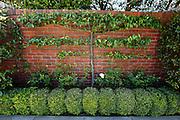 A plant grows on a brick wall in San Francisco, California. (Photo by Brian Garfinkel)