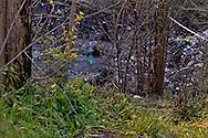 Roma, 9 Aprile  2015<br /> Incendio in un campo rom a via del Cappellaccio alla Magliana, fra i resti di una baracca andata a fuoco è stato trovato il corpo carbonizzato di un romeno di 27 anni. La polizia scientifica non esclude l'incendio doloso. Nella foto: Il corpo carbonizzato (C)<br /> Rome, April 9, 2015<br /> Fire in a Roma camp in via the Cappellaccio to Magliana, among the remains of a hut burned down was found the charred body of a Romanian of 27 years. The police scientific does not exclude arson. Pictured: The charred body (C)