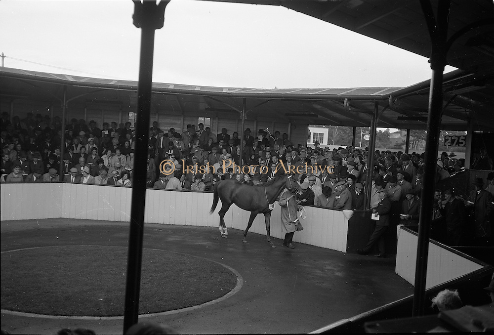 24/09/1963<br /> 09/24/1963<br /> 24 September 1963<br /> Goffs September Bloodstock Sales at the RDS, Dublin. Picture shows Lot 275 in the sales ring.