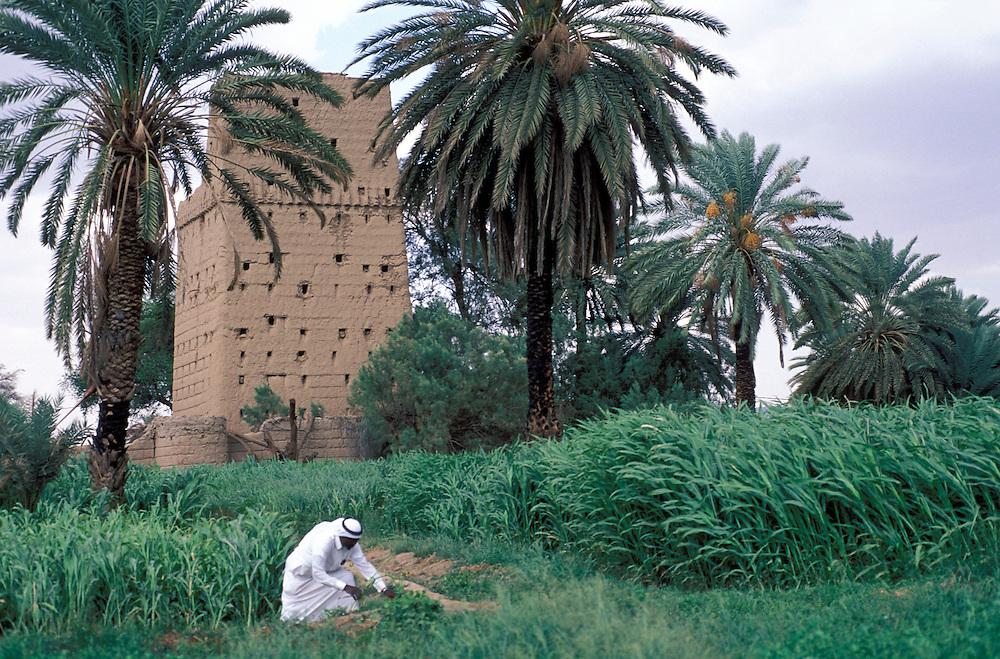 SAUDI ARABIA: Najran.A farmer checking his crops at Najran oasis
