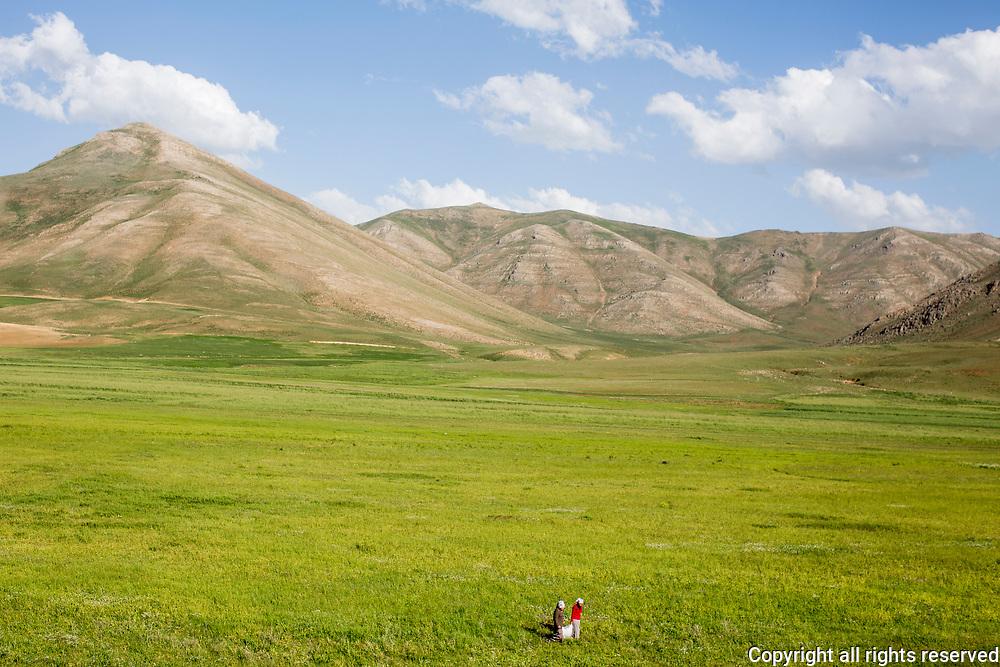 Harvesting wild spring herbs, Van Province, Turkey