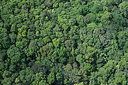 Rainforest Canopy<br /> Pakaraima Mountains<br /> GUYANA<br /> South America
