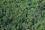 Rainforest Canopy<br /> Pakaraima Mountains<br /> GUYANA<br /> South America