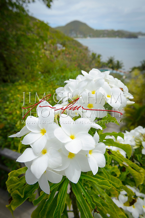 Tropical flowers on St. Barths. Photography Jim Graham