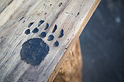 Ray Schulz visits Black Bear Diner in Milpitas, Calif. to demonstrate the chainsaw carving of the Black Bear wooden sculptures on July 11, 2012.  Schulz carves paw prints into a bench top, which are later painted black, sanded smooth, and stained for weather protection.  Photo by Stan Olszewski/SOSKIphoto.