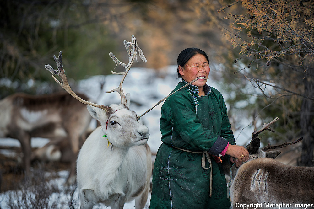 The Dukha people are reindeer nomads. For thousands of years they have lived in the remote sub arctic landscape in northern Mongolia, known as the Taiga. They were here long before Gengis Khan united hostile nomadic tribes into an army which conquered history's largest imperium in the year 1100 . What makes them unique is that they are the only reindeer herding community who do not eat their own animals. The world has been standing still in these mountains, until now. The modern and urbane world has reached the Dukha people and it threatens them.<br />