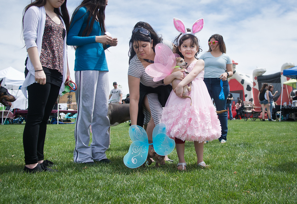 mkb041617b/metro/Marla Brose -- Tiffany Silva, 5, holds Minnie, a two-month-old chihuahua wearing fairy wings, while her mom Meyalli Aguirre wrangles Coco, also two-months-old and wearing blue wings, after the Eggs N' Beggin dog parade at Cabezon Recreation Center in Rio Rancho, Saturday, April 8, 2017. (Marla Brose/Albuquerque Journal)