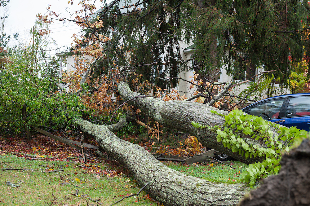 Chappaqua, NY, USA 30 Oct 2012: Hurricane force winds from Hurricane Sandy hit Westchester County New York Monday. Fallen trees caused the most severe damage in towns not on the water, as seen here the day after the storm. At least 150 large trees were downed in Chappaqua NY. Here a neighbor's oak tree hit a home and two cars, causing property damage but no injuries. Elsewhere in the Hudson Valley three people, including two children, died when trees fell on homes.