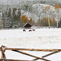 Winter Scene, Grand Teton National Park, Wyoming