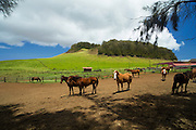 North Kohala ranch land, Island of Hawaii