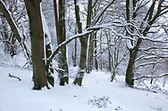 Beechwood at Little Gaddesden Hertfordshire in Snow