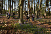 A family walks through Bluebell woods, on 23rd April 2017, in Wrington, North Somerset, England.