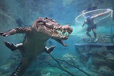 Thrill-seeking tourists come face-to-face with a killer 16ft Saltwater crocodile - 8 Sep 2017