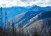 A valley of mostly burnt trees in the North Cascades along the Pacific Crest Trail near Harts Pass, Washington, USA.