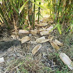 Bamboo Garden at Foothill College, Los Altos Hills, California