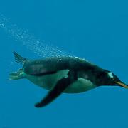 Penguins and bubbles!