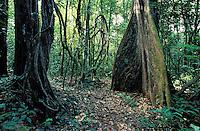Saül village - Amazonnian forest  -French Guyane - France