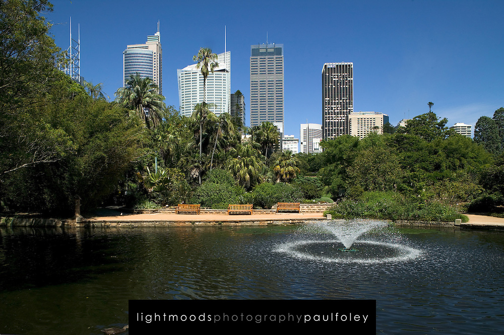 View from Botanic Gardens to City Skyline, Sydney,Australia