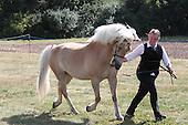 Class 56 - Inhand Hunter Horse & Pony