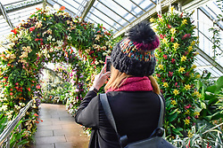 © Licensed to London News Pictures. 08/02/2018. LONDON, UK.  A visitor views the displays in Kew Garden's first Thai-inspired Orchids Festival, which celebration of Thailand's vibrant colours, culture, and magnificent plant life.   The festival runs from Saturday 10 February to Sunday 11 March 2018 and is hosted in partnership with the Royal Thai Embassy, London and Thai Airways.  Photo credit: Stephen Chung/LNP