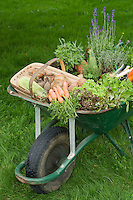 Wheelbarrow Full of Vegetables