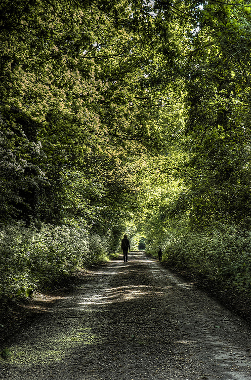 A young woman walking with her dog along a tree lined avenue in the summer sunshine