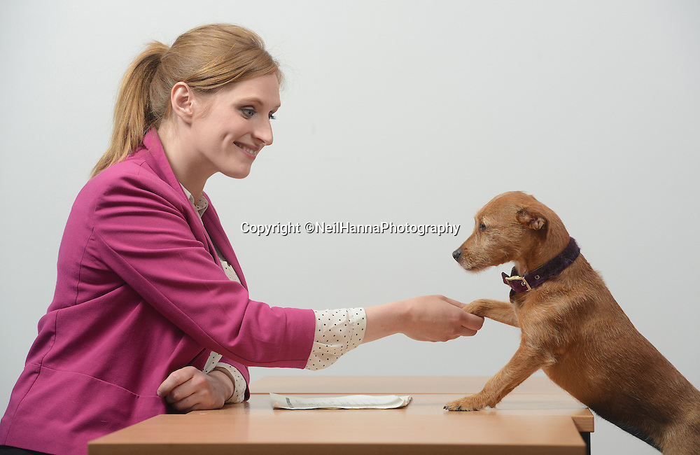 Napier University, Edinburgh<br /> Interviews are tough enough without having to face a formidable panel of the four-legged variety.<br /> <br /> Budding vet nursing students will be put through their paces at Edinburgh Napier University by an unconventional interrogator Ð a puppy.<br /> <br /> Golden Labrador Belle has been drafted in alongside black Labrador Ellie and Terrier Holly to make sure candidates can mix well with pets.<br /> <br /> Pictures posed with the help of..<br /> Sarah Manning (pink jacket) modelling as the student, Allison Smith (blonde) and Jodie Smith (brunette) are both Veterinary Nursing Lecturers<br />  <br /> Pictures by  Neil Hanna  - mobile 07702246823