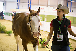 Josiane Gauthier, (CAN), Ju Juzz Gunslinger - Horse Inspection Reining  - Alltech FEI World Equestrian Games™ 2014 - Normandy, France.<br /> © Hippo Foto Team - Dirk Caremans<br /> 25/06/14