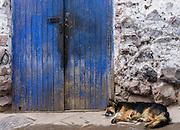 Sleeping Dog. Pisac, Peru.