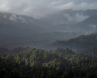 Mist over the forest in Kahurangi National Park, South Island, New Zealand