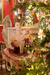 Chatsworth House Press Launch -  Nutcracker at Chatsworth on the eve of its Christmas Season Opening.  The Sugar Plumb Fairy ballerina  Alice Rathbone from the Claire Dobinson School of Dancing hangs a gingerbread man decoration on one of the four giant Christmas trees in the Great Dining Room which is themed as  <br /> The Land of Sweets<br /> <br />   04 October 2016<br />   Copyright Paul David Drabble<br />   www.pauldaviddrabble.photoshelter.com
