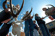 PRICE CHAMBERS/JACKSON HOLE DAILY<br /> Scouts Dillon Weiss and Tyson Danby carry a beetle-cleaned elk skull with an impressive rack as it goes up for sale at the Jackson Hole Boy Scout Elk Antler Auction on Saturday during ElkFest.