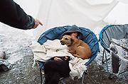 Dog sitting on woman's lap at MUDTEK festival in Llanddewi Brefi, Wales 2016