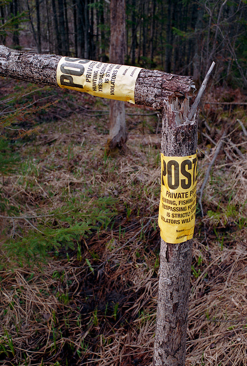 """A SMALL TREE WITH TWO """"NO TRESPASSING"""" SIGNS IS SHOT IN HALF NEAR A TROUT STREAM IN ALGER COUNTY MICHIGAN."""