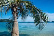 Palm tree hanging over the clear waters around Nanuya Lailai island, the blue lagoon, Yasawas, Fiji, South Pacific