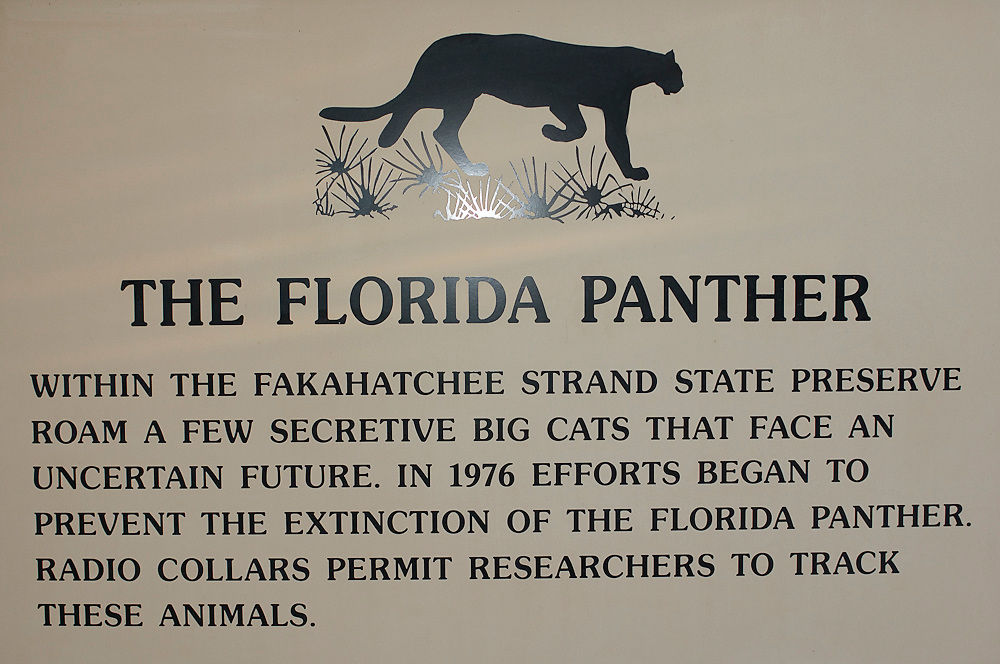 Sign in the Fakahatchee Strand State Park in the Everglades informing visitors about the precarious state of the Florida Panther (Felis concolor coryi), a subspecies of Mountain Lion that is practically extinct in the wild.