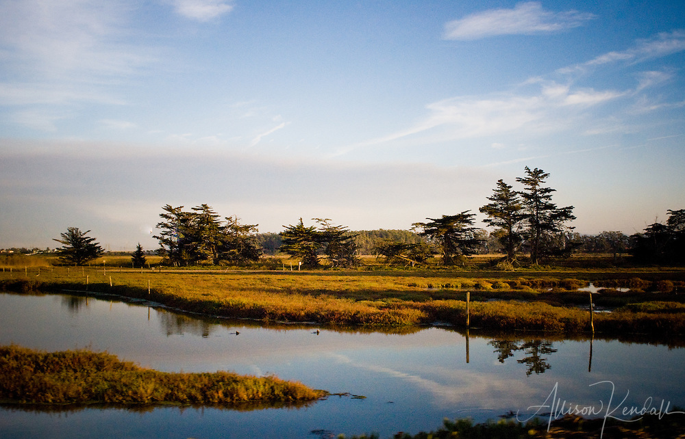 Blue skies and summer clouds are reflected in the tidal estuary waters of the Elkhorn Slough