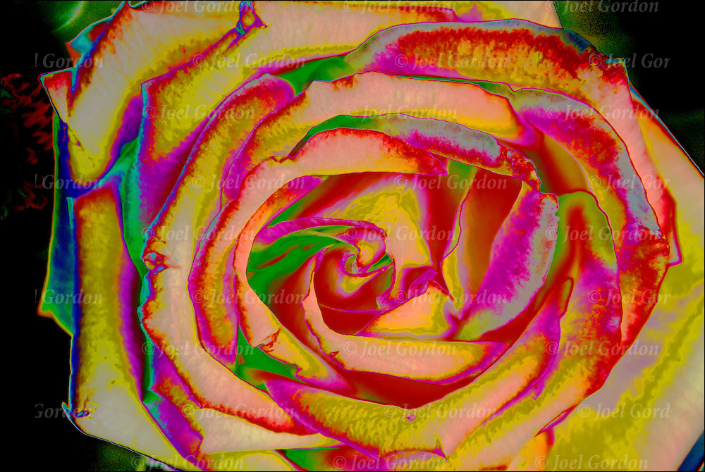 Colorful abstract close up of the pattern and texture of a rose