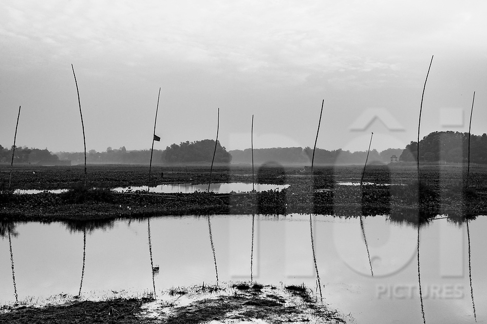 Mysterious wooden poles rises from a pond, Pubail, Bangladesh, Asia